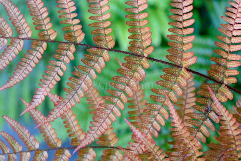Apelsin, Autumn Ferns och gröna ormbunkar som en naturbakgrund arkivfoto