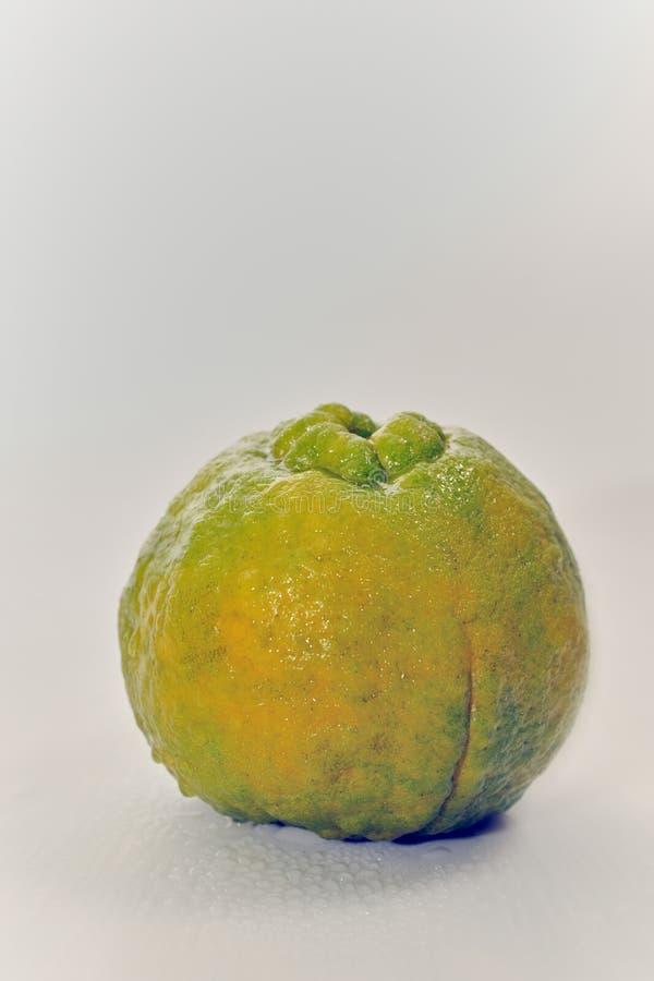 Apelsin för natur för organisk tangerinThailand mat söt arkivbild