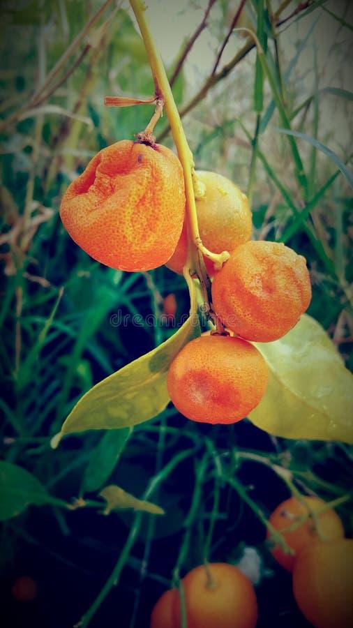 Apelsin i solskendagen royaltyfria bilder