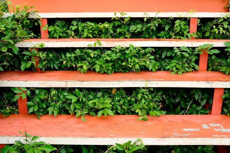 Apelsin målad trätrappa med växter arkivbilder