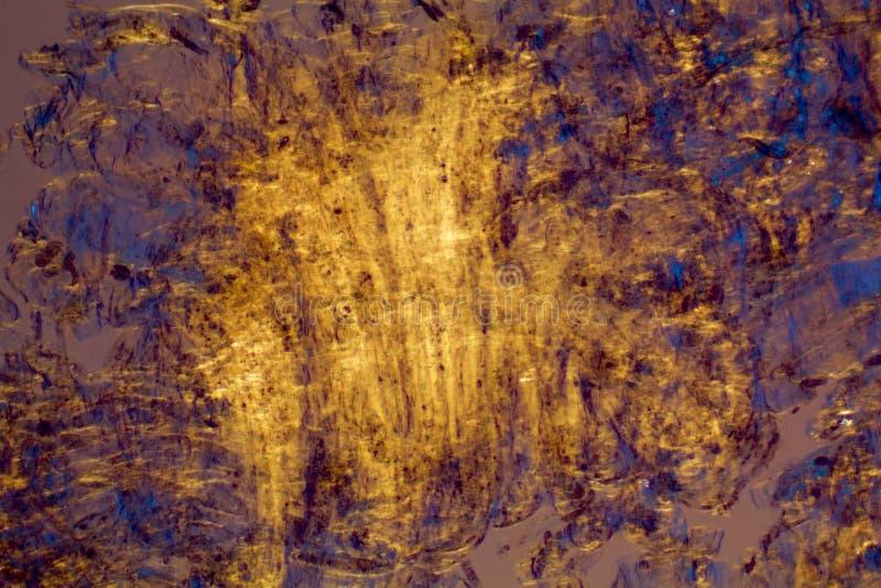 Apelsin och blått, abstrakt micrograph av hud från ett blåbär royaltyfri bild