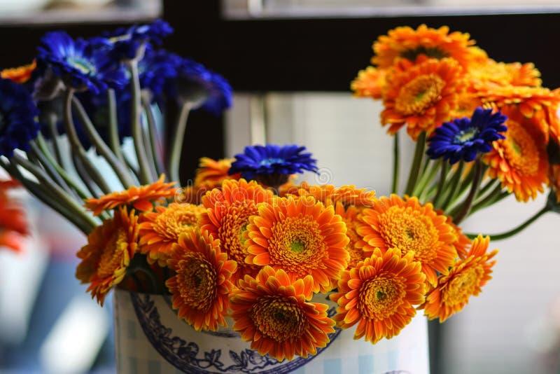 Apelsin- och blåttgerberablommor som tillsammans grupperas royaltyfria bilder