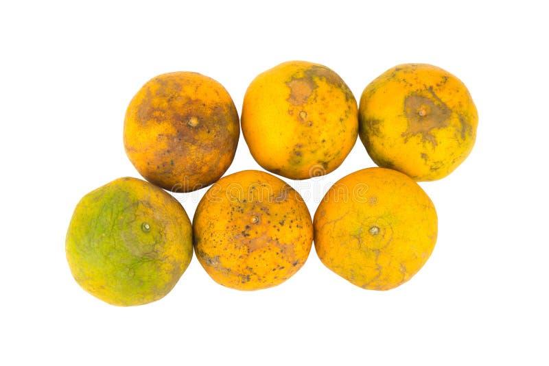 Apelsin ruttet smutsigt sex bakgrund isolerad white arkivfoto