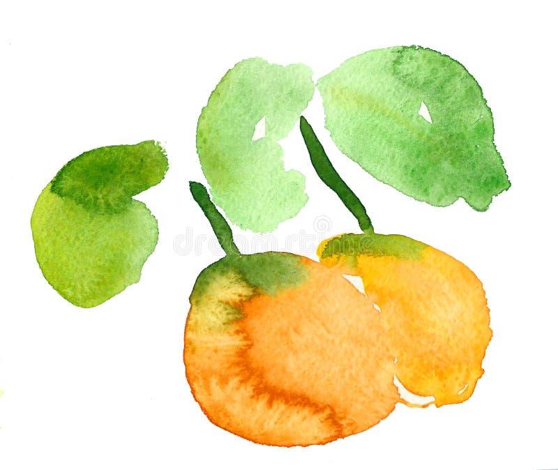 Apelsin vattenfärg stock illustrationer