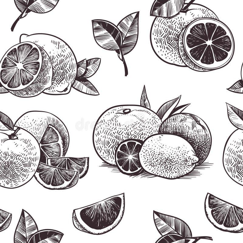 Apelsinen b?r frukt den s?ml?sa modellen Tappningcitrusfrukt, utdragna apelsiner för hand med blommor och sidor skissar den tropi royaltyfri illustrationer
