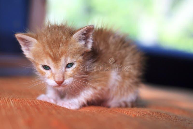 Apelsinen behandla som ett barn kattungen arkivbilder