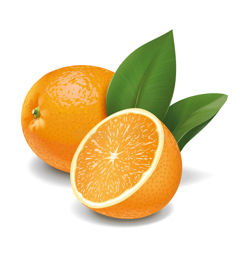 Apelsiner royaltyfri illustrationer