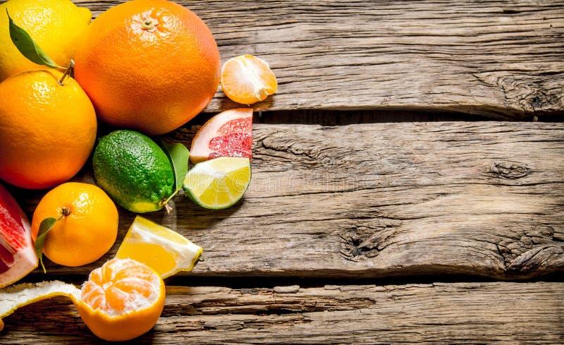 apelsiner för citrusfruktcitronlimefrukter royaltyfria bilder