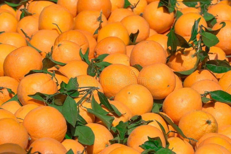Apelsiner! Mycket söt och smaklig citrus royaltyfria foton