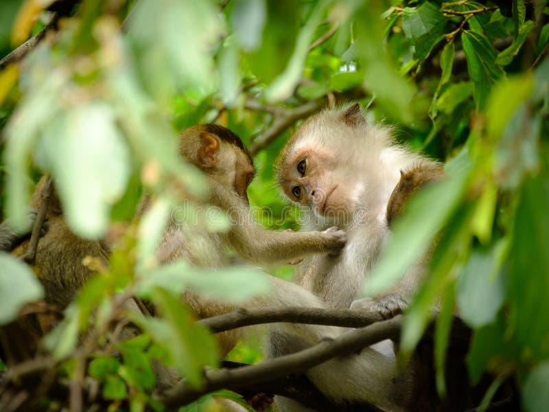 apen royalty-vrije stock foto's