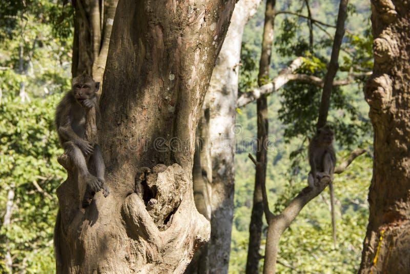 Apen in boom royalty-vrije stock foto's