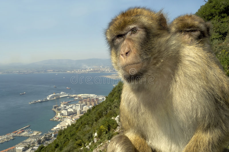 Apen in Gibraltar royalty-vrije stock foto
