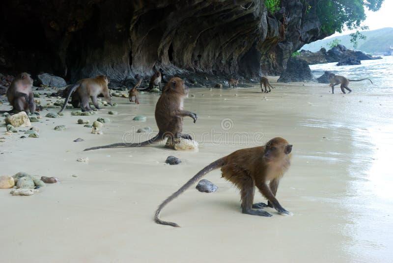 Apen op het strand royalty-vrije stock afbeeldingen
