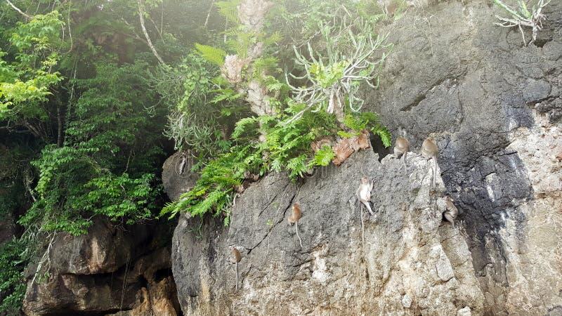 Apen op klip dichtbij strand overzees hol stock afbeelding