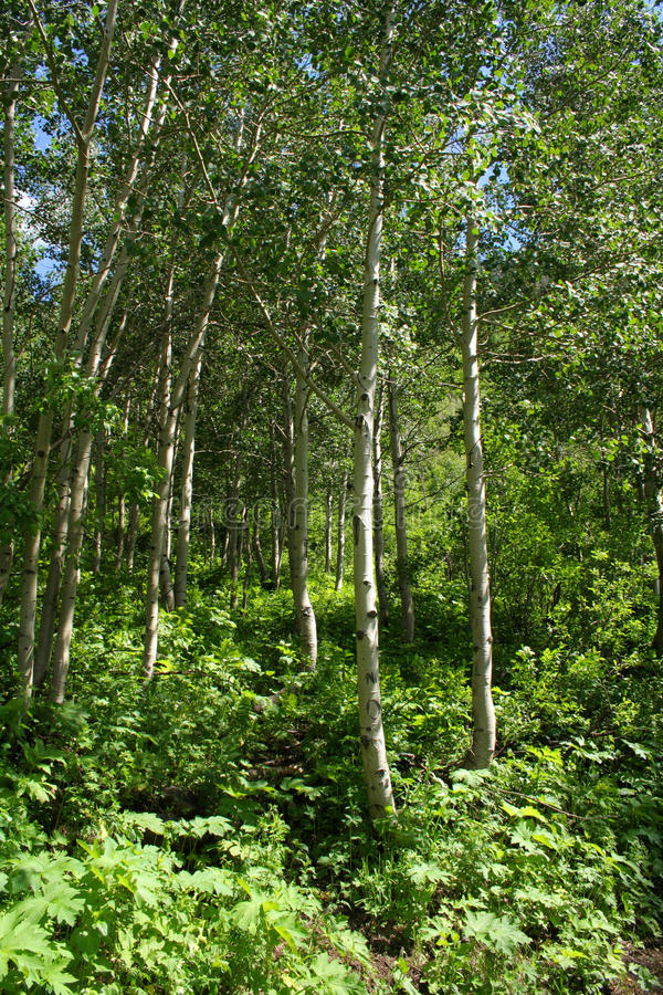 Free Apen Trees Stock Image - 10231971
