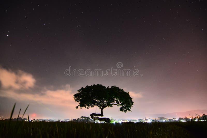Apenas árvore na noite fotografia de stock royalty free