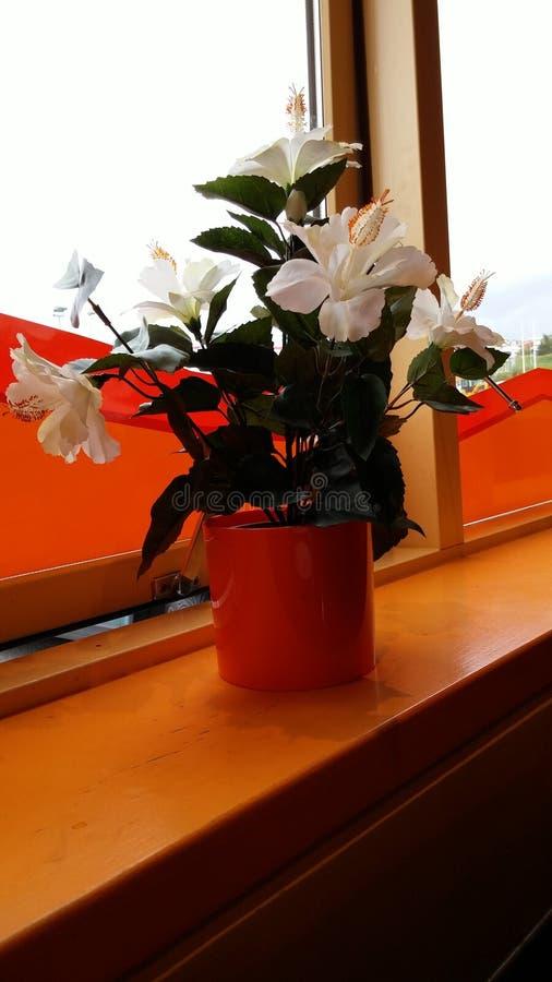 Apenas algunas flores de la cogida fotografía de archivo libre de regalías