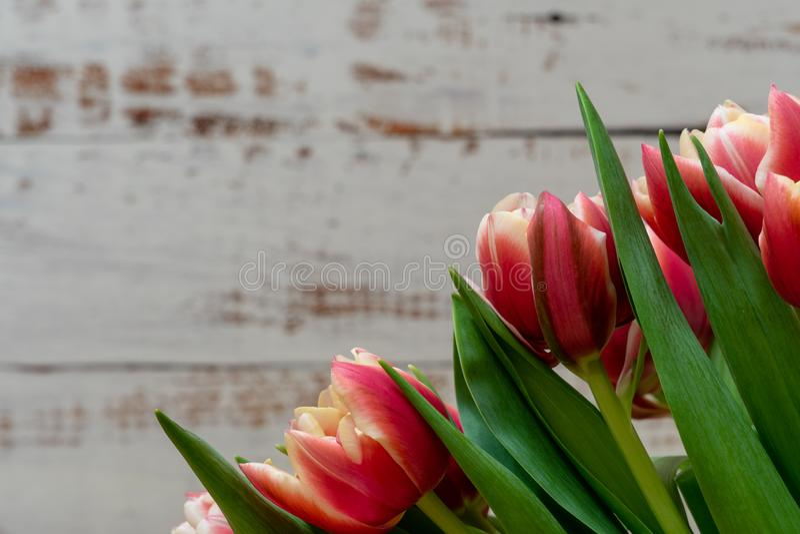 Apenas chovido sobre Ramalhete de tulipas vermelhas e alaranjadas no fundo de madeira branco fotografia de stock royalty free