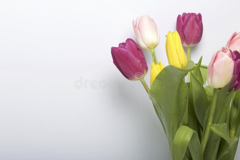 Apenas chovido sobre Um ramalhete das tulipas de cores diferentes em um fundo branco fotos de stock