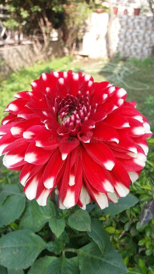 Apenas flores bonitas fotos de stock royalty free