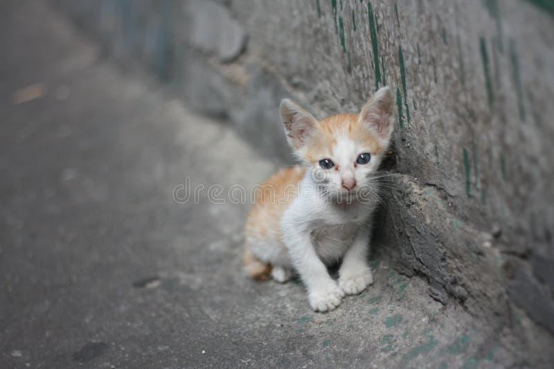 Apenas gato alaranjado branco pobre da vaquinha sem posi??o da mam? ao lado da parede suja pr?ximo pelo canal fotos de stock