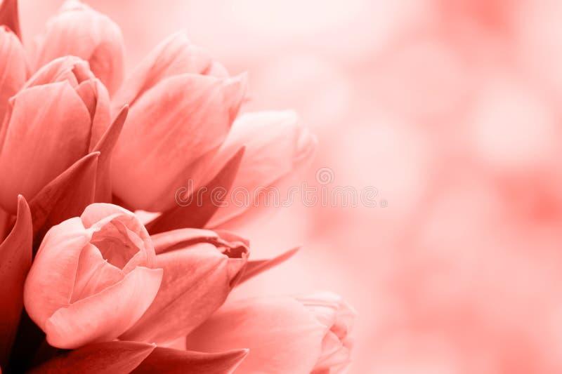 Apenas llovido encendido Ramo del tulipán en el fondo del bokeh foto de archivo