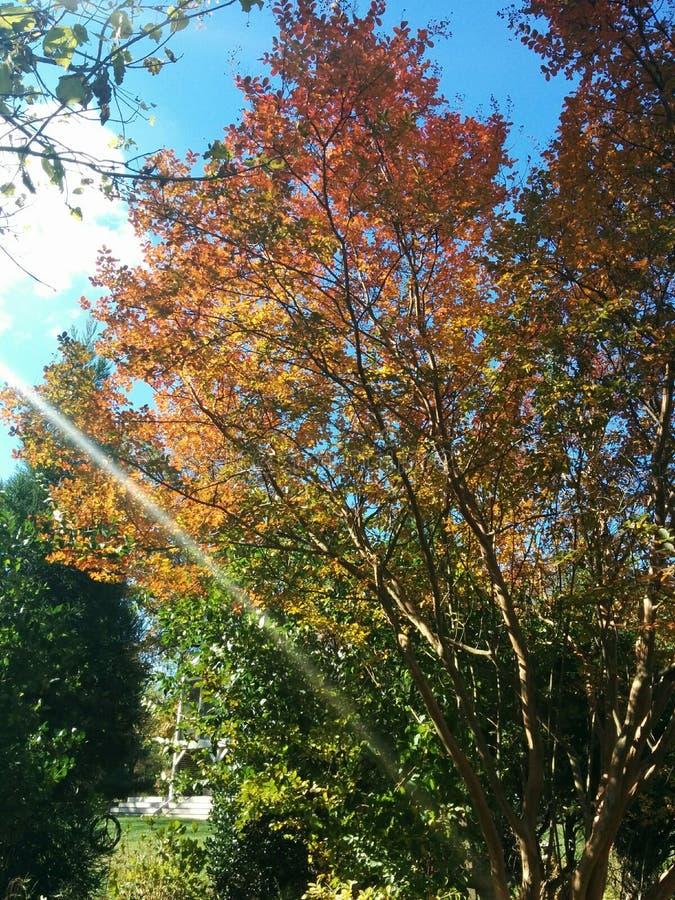 Apenas otoño fotografía de archivo libre de regalías