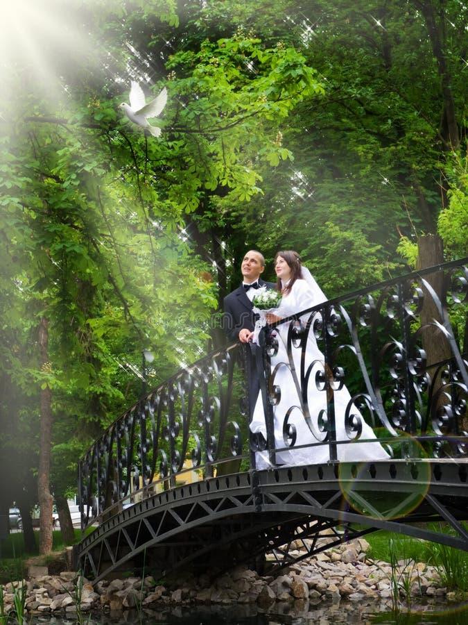 Apenas pares casados release/versión una paloma del blanco fotografía de archivo