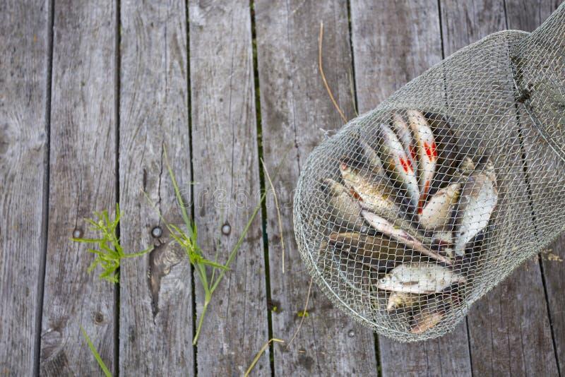 Apenas pescados catched del río en la jaula de la pesca en el backgr de madera fotografía de archivo