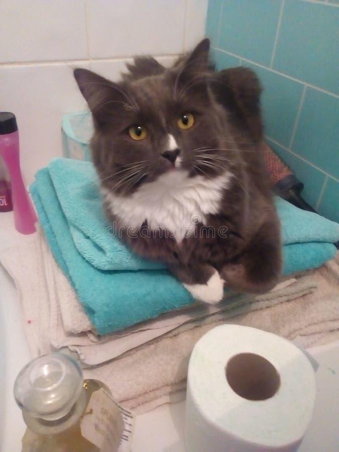 Apenas um gato que refrigera em um banheiro fotografia de stock