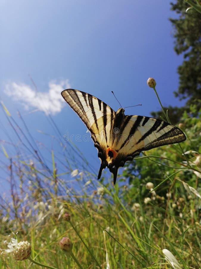 Apenas una pequeña mariposa en las flores foto de archivo
