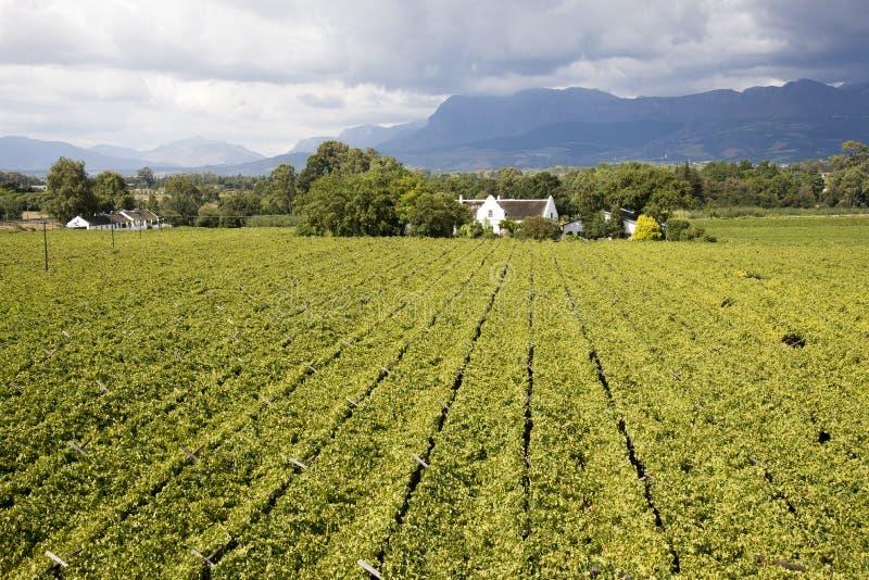 Aperçu d'un vignoble Afrique du Sud image stock