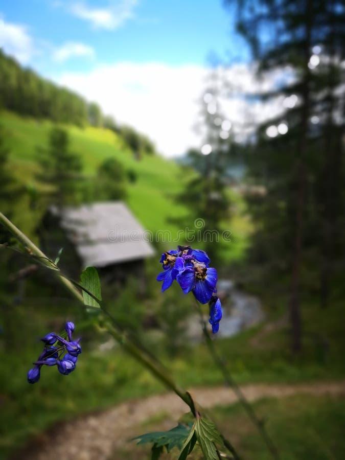 Aperçu de montagne photographie stock