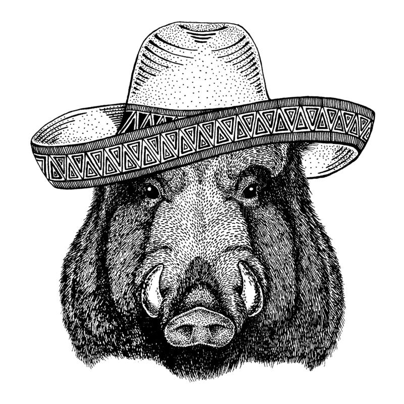 Aper, boar, hog, wild boar wearing traditional mexican hat. Classic headdress, fiesta, party. Aper, boar, hog, wild boar wearing traditional mexican hat vector illustration