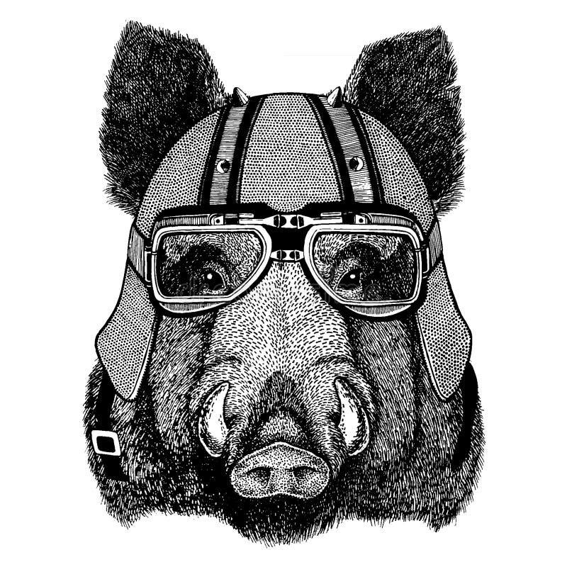 Aper galt, gödsvin, vildsvin som bär en motorcykel, aero hjälm Utdragen bild för hand för tatueringen, t-skjorta, emblem, emblem, royaltyfri illustrationer