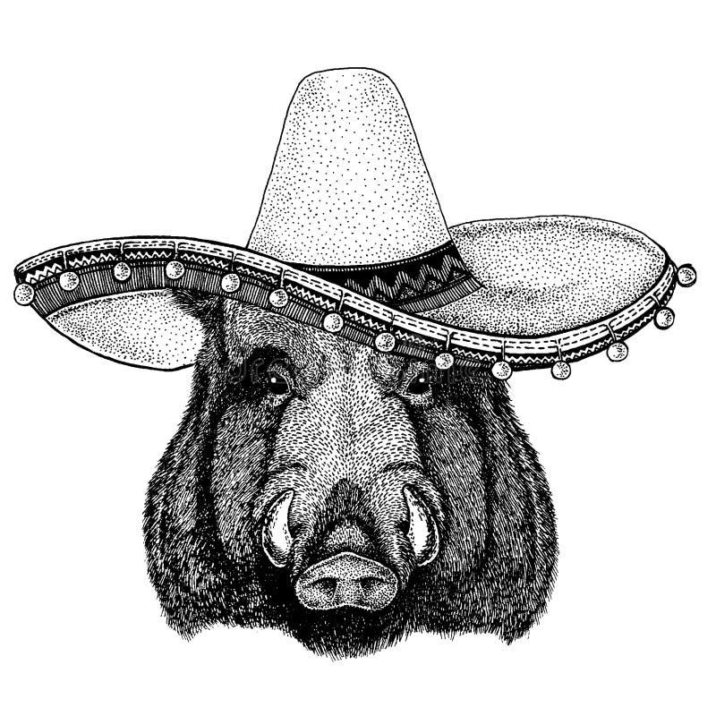 Aper, knur, wieprz, dziki knur jest ubranym tradycyjnego meksykańskiego kapelusz Klasyczny pióropusz, fiesta, przyjęcie ilustracji