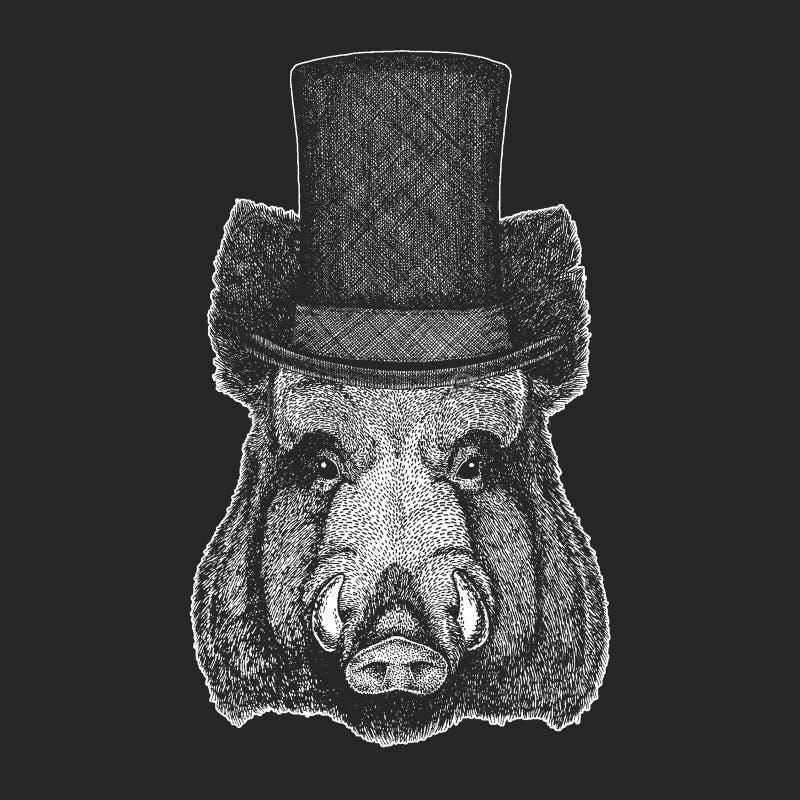 Aper, knur, wieprz, dzikiego knura Odgórny kapelusz, butla Modnisia zwierzę, dżentelmen Klasyczny pióropusz Drukuje dla dziecko k ilustracji