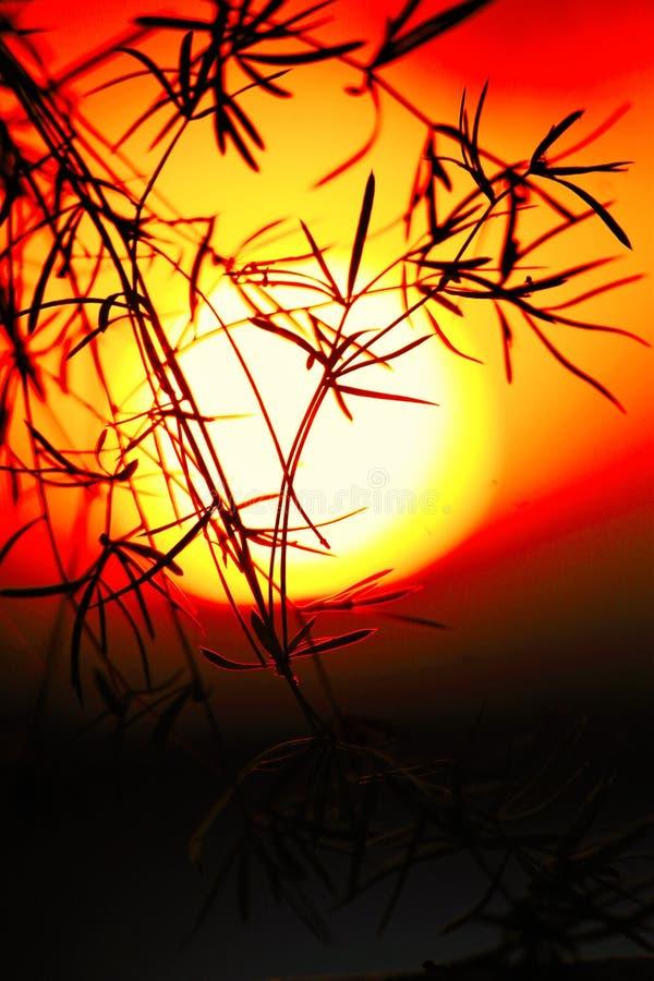 Aperfeiçoe a cena da captação do por do sol fotografia de stock royalty free