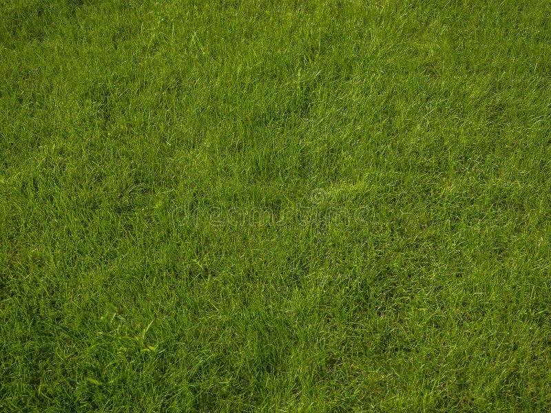 Aperfeiçoe a grama verde curto luxúria fresca - fundo fotografia de stock royalty free