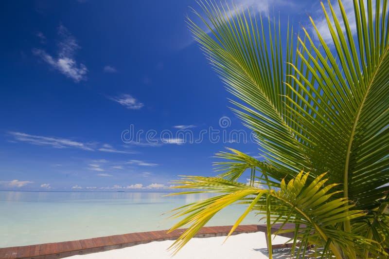 Aperfeiçoe o abrandamento tropical do console. fotografia de stock