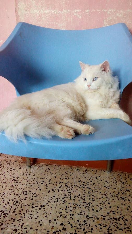 Aperfeiçoe o gato do doce da pose imagens de stock royalty free