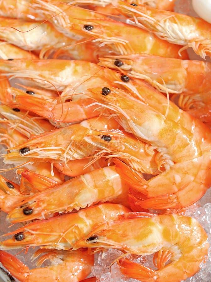 Aperitivo do camarão do tigre fotografia de stock