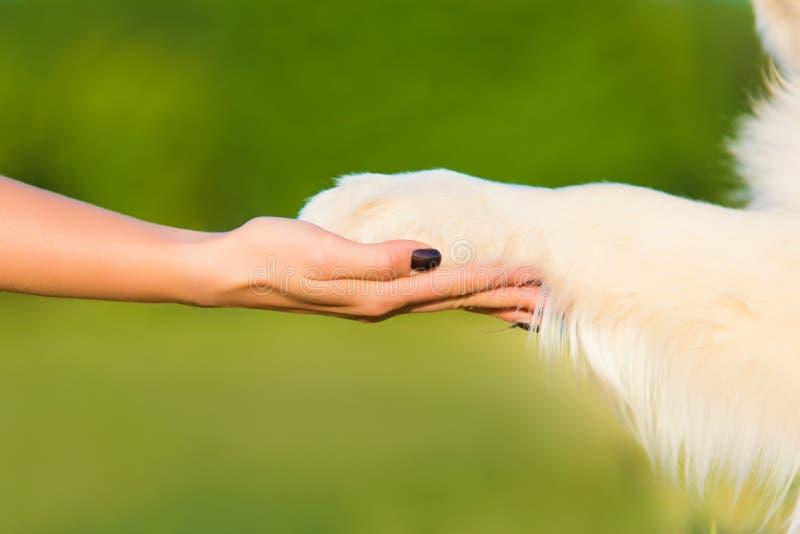 Aperto de mão do ser humano e do cão no verde fotos de stock