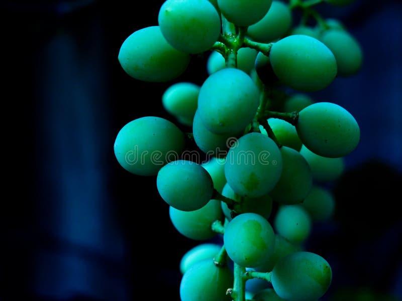 Aperto em uvas foto de stock royalty free