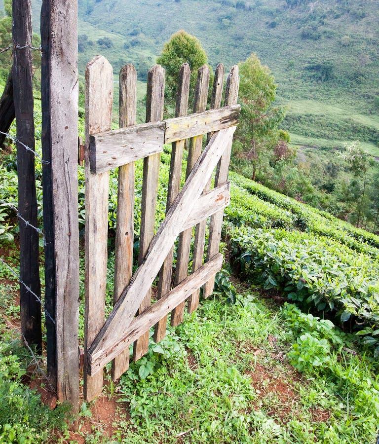 Apertura di legno del portone sull'azienda agricola del tè immagine stock libera da diritti