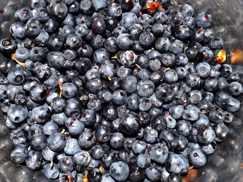 Apetyczne czarne jagody fotografia stock