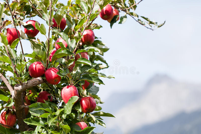 Apfelbaum über Berglandschaft lizenzfreie stockfotos