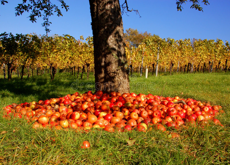 Apfelbaum und Weinberg lizenzfreie stockbilder