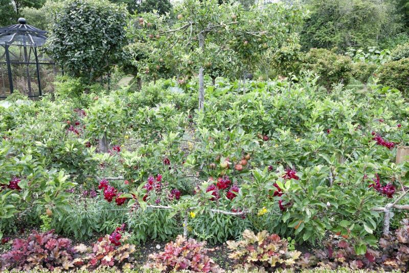 Apfelbaumobstgarten in einem Sommergarten stockfotografie