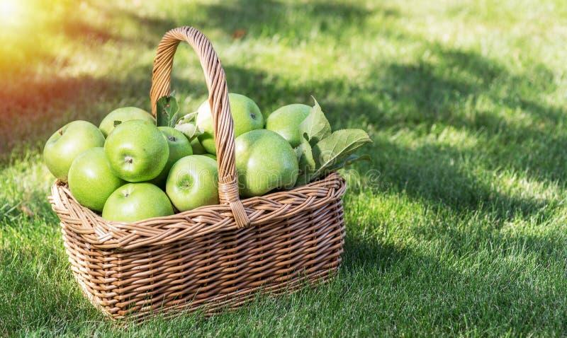 Apfelernte Reife grüne Äpfel im Korb auf dem grünen Gras lizenzfreie stockfotografie